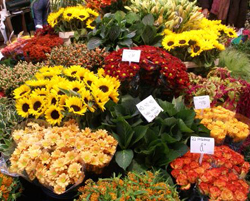 Amsterdam Flower Market in the Netherlands
